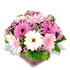 Assorted Pink Gerbera Bouquet From Online