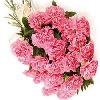 24 Pink Carnation Bouquet